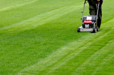 Lawn Cutting Swansea